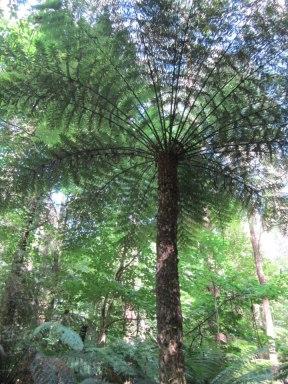 Dandenong Ranges National Park, Victoria, Australia