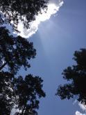 Double Lake Recreation Area, Sam Houston National Forest, Texas