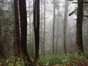 near Bellingham, Washington