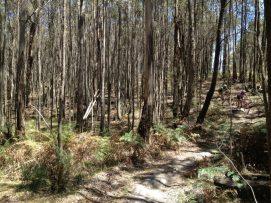 Wombat State Forest, Victoria, Australia