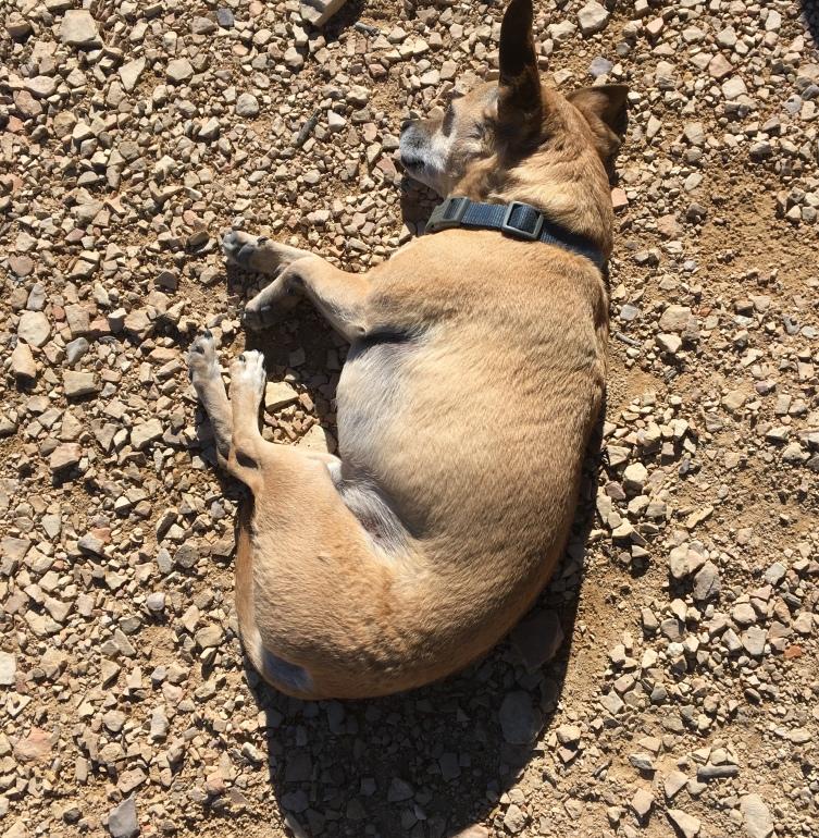 desert dog, 2