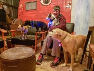 dogs of Terlingua