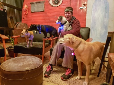dogs of Terlingua