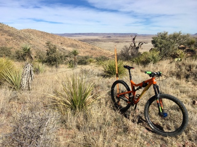 bike and bike tree