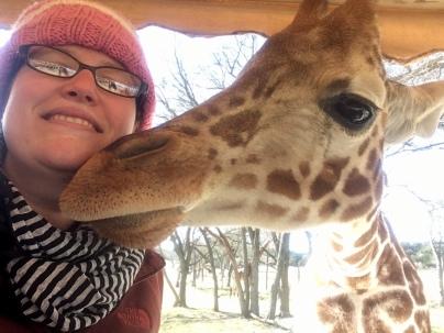 Giraffe kisses