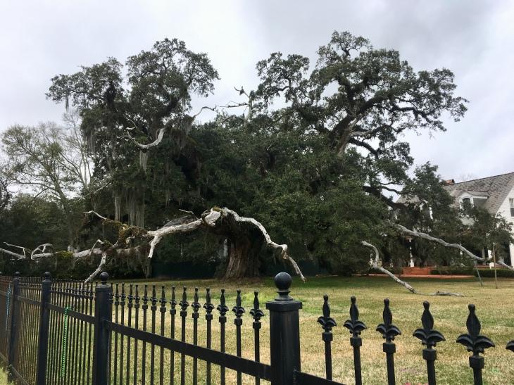 an impressive tree