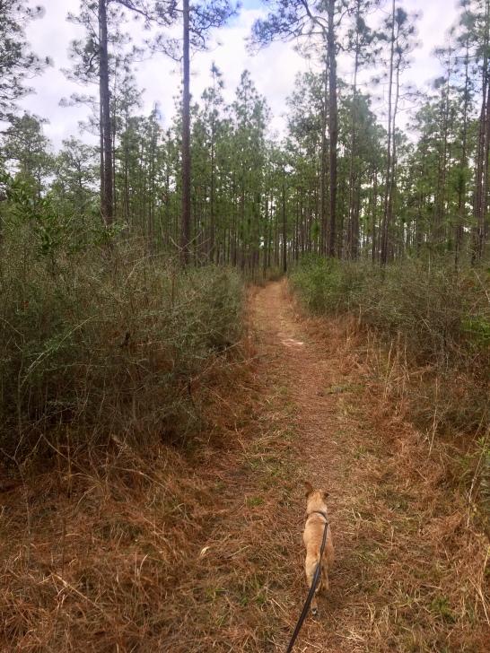 Hops hikes