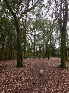a beautiful dog park!