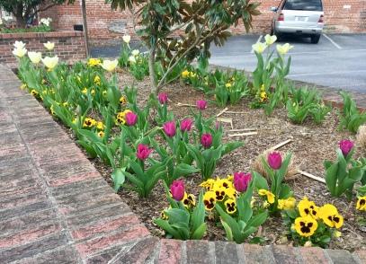 Hendersonville: I'm a sucker for tulips