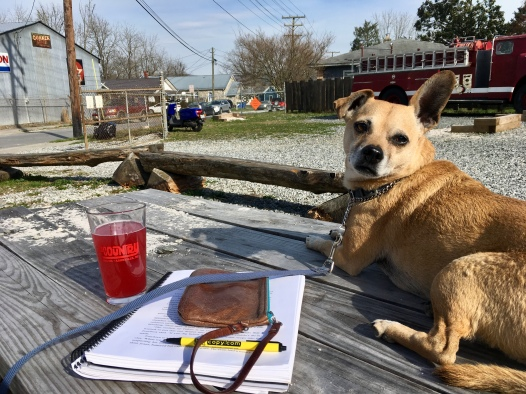 with beer and book in the sunshine at Upcounty Brewing