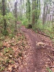 final Athens walk: Oconee Forest Park