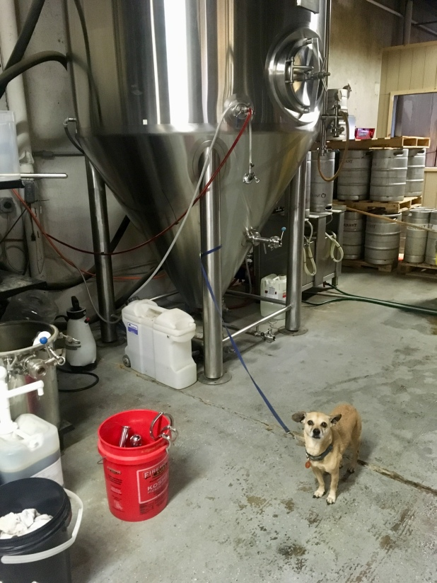Hops back in a brewery: Conquest Brewing