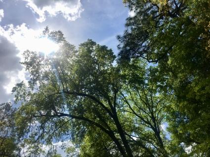 South Carolina sky