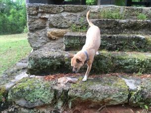 Hops on rocks