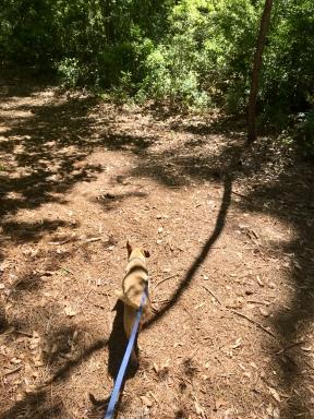 hiking Audubon Newhall Preserve