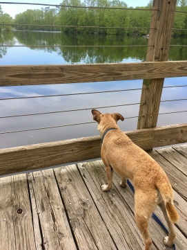 Hops is suspicious of Greenfield Lake, as of all water