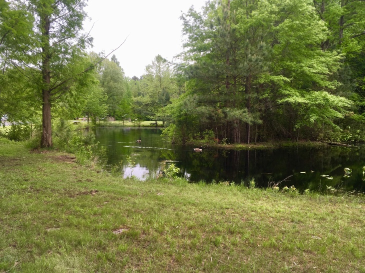 excellent free camping in Redden State Forest, with Canada geese