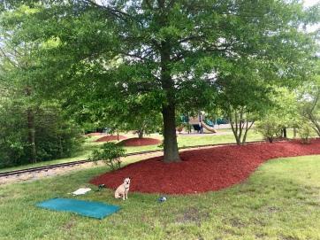 yoga in Milton Memorial Park