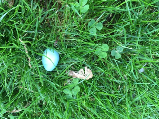 robin's egg