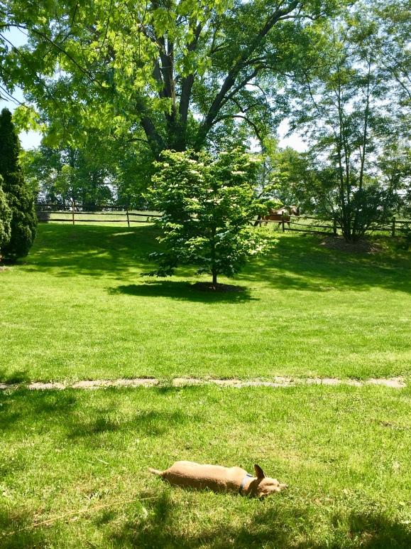 front to back: Hops; flowering dogwood; horse